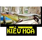 Logo Trại Rắn Mối KIỀU HOA