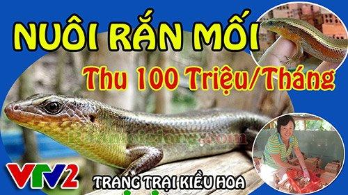 Nuôi Rắn Mối Thu Nhập 100 Triệu / Tháng - VTV2 - 2014
