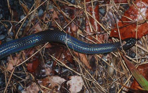 Kiểm lâm đòi bỏ chốt vì sợ rắn khổng lồ tấn công
