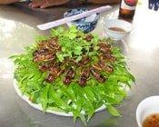 Trở thành tỷ phú từ nuôi... côn trùng
