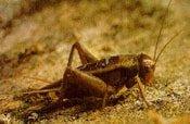 Vượt khó làm giàu nhờ côn trùng