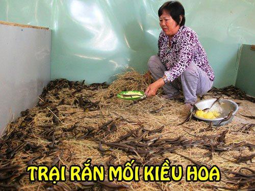 Cô Hoa đang cho rắn mối ăn