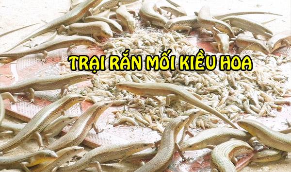 Cho rắn mối ăn